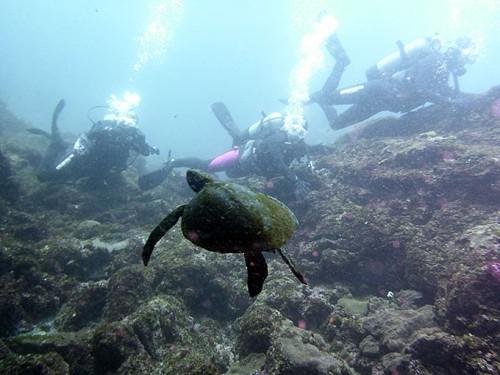 底土でウミガメ