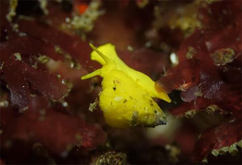 黄色のちっこい貝