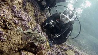 スッキリ晴れの八丈島、うねり残りの八重根で体験ダイビング