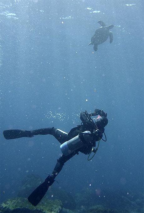甲羅がかけてるアオウミガメ