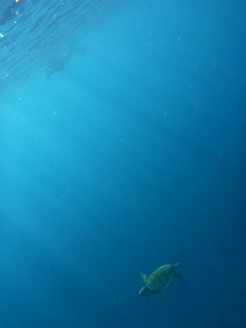 上からカメを見てみたり