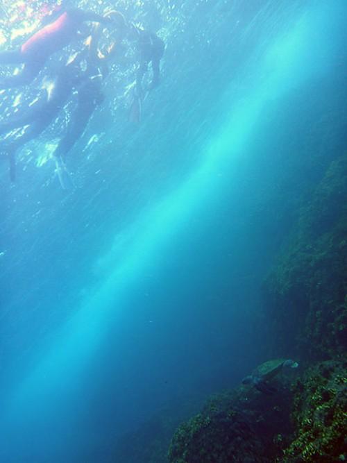 ウミガメ下を泳いでいって
