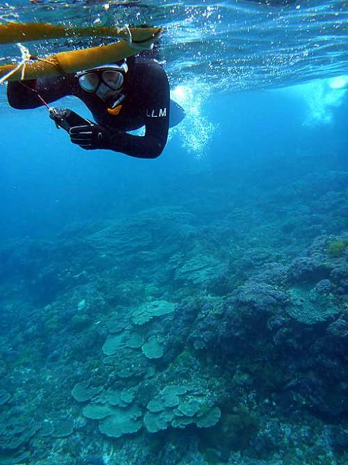 底土のサンゴを見て周り