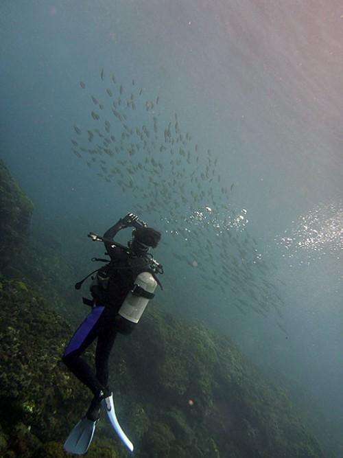 群れてる魚も撮ってみて