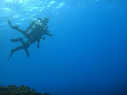キビナゴ見つつ沖に出て