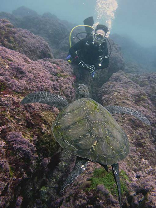 底土でウミガメ見てみたり