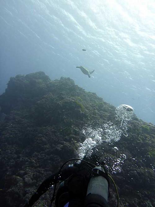 遠目にウミガメ見たりもして