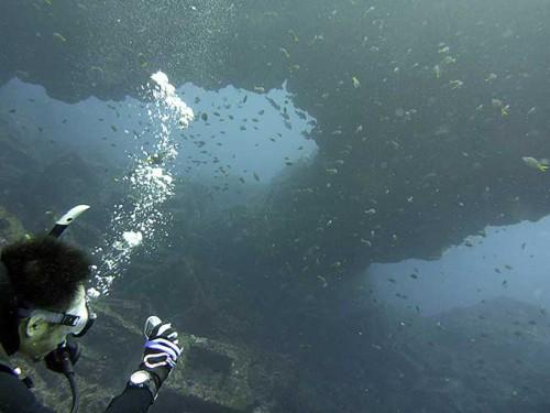 魚集まるアーチ下