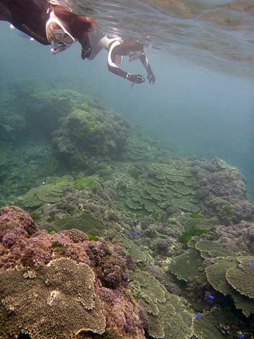 サンゴの海で魚を見たり