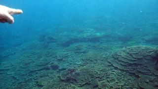 うっすら青空も見えてきた八丈島、うねりはあるが底土でシュノーケリング