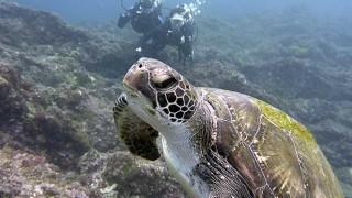 夏の日差しが強くもあった八丈島、うねりの続く底土で体験ダイビング