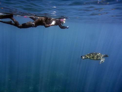 カメの後ろを泳いでみたり