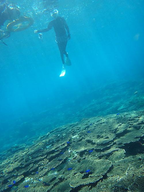広がるサンゴの底土です