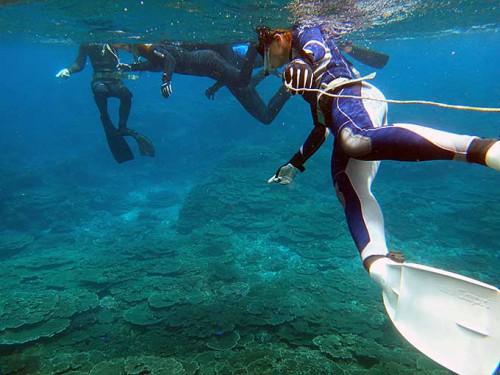 サンゴの広がる底土の海で