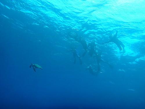 沖に出られればアオウミガメもたくさんで