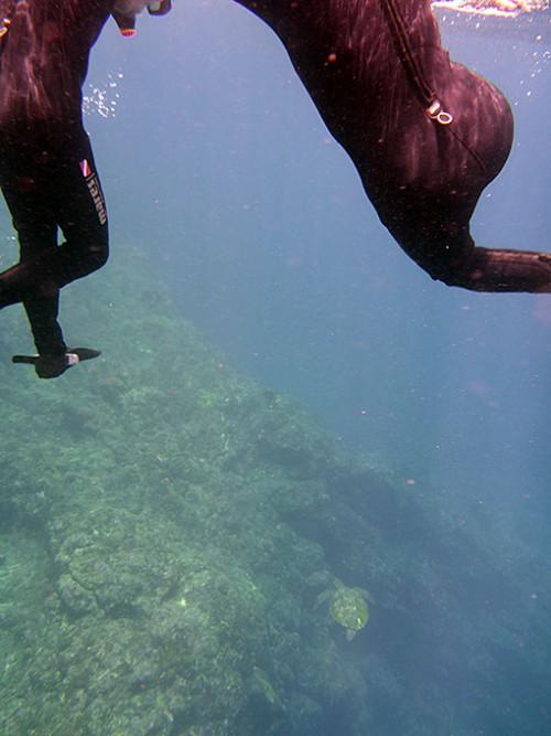 足元カメが泳いで行ったり