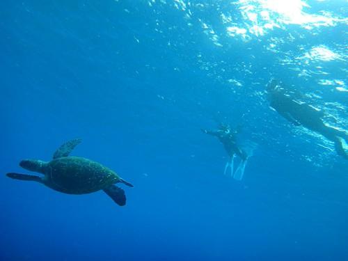 沖でウミガメ見られたり
