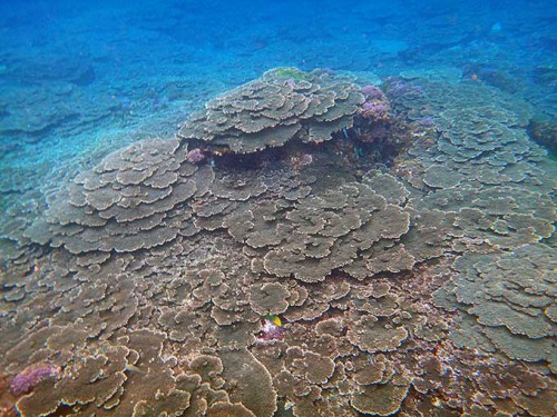 サンゴ広がる底土です