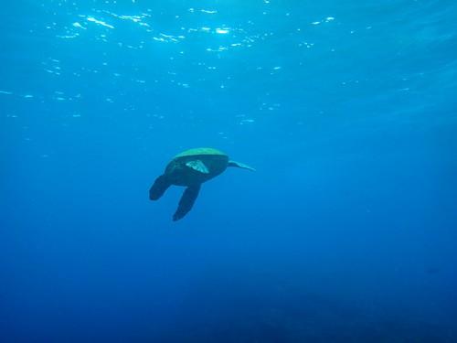 カメもたくさん泳いでて