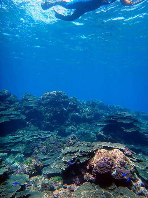 サンゴの上を泳いでみたり