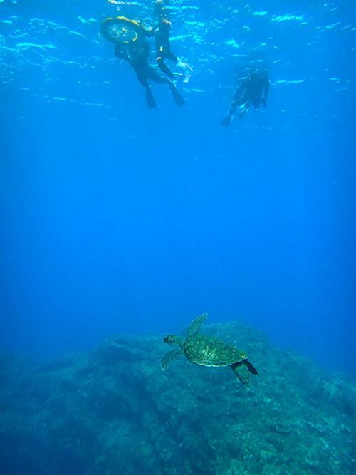 みんなの下をカメが泳いでいたりして