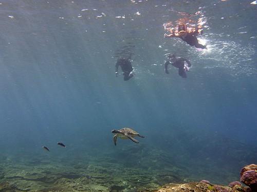 サンゴのとこにも小さいカメがおりました