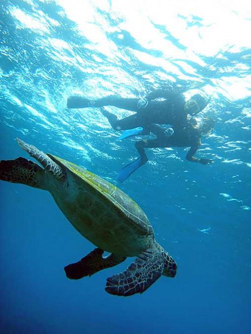 泳ぐカメを上から眺め