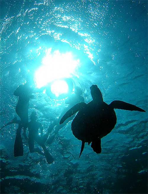 夏の日差しとアオウミガメ