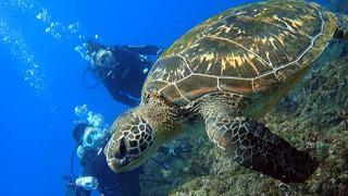 夏の青空広がってきていた八丈島、うねり残りの八重根で体験ダイビング