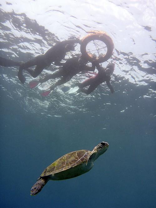 ゆっくりカメと泳いだり