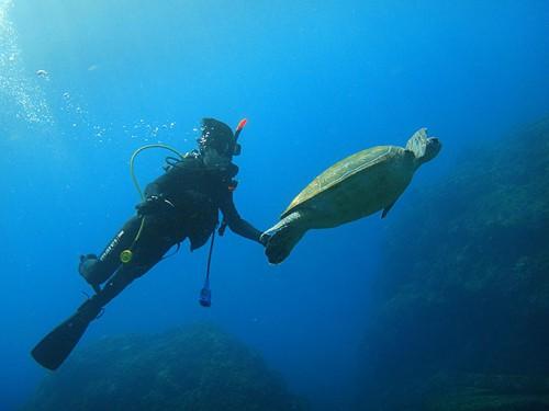 講習しながらウミガメ見たり