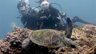 強い陽ざしで暑さも厳しい八丈島、白濁りの八重根で体験ダイビング