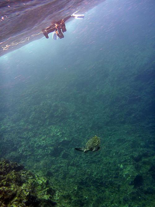 上から泳ぐウミガメ見たり
