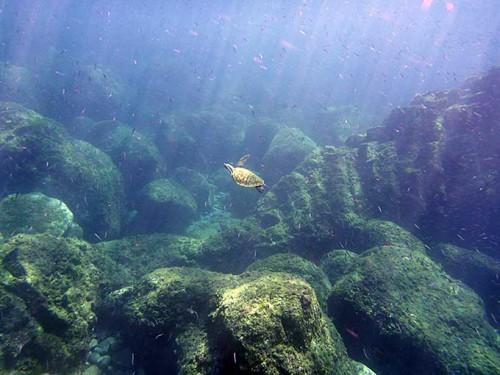差し込む陽ざしとアオウミガメ