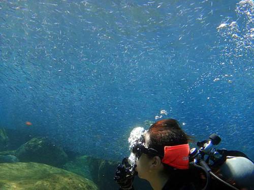 キビナゴいっぱい夏の海