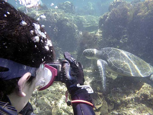 お食事中のアオウミガメを撮ってみて