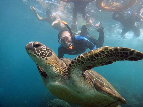 近くでのんびりアオウミガメが泳いでいたり