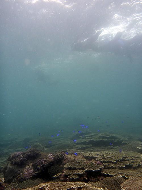 白濁りはありますが、綺麗な魚とサンゴを見ながら泳いでいって