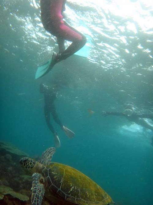 すぐ足もとをアオウミガメが泳いでいたり