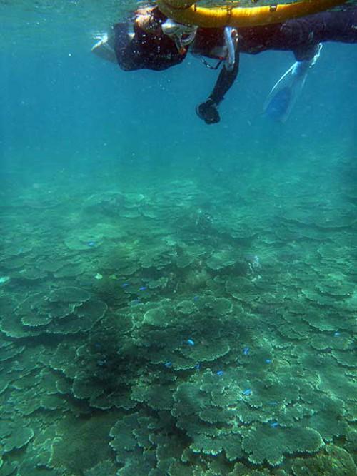 サンゴの海をゆっくり泳ぎ
