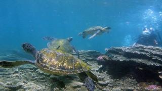 青空あって夏な日差しの八丈島、若干水が綺麗な底土で体験ダイビング