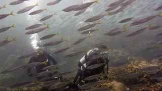 夏の青空もある八丈島、沖は濁るが魚はたくさんの底土で体験ダイビング