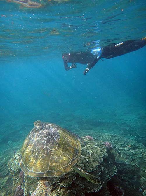 大きなアオウミガメも見られたり