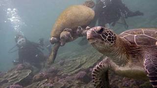 カラッと青空広がる八丈島、強まるうねりの底土で体験ダイビング