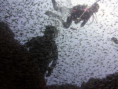 ちっこい魚も集まってたり