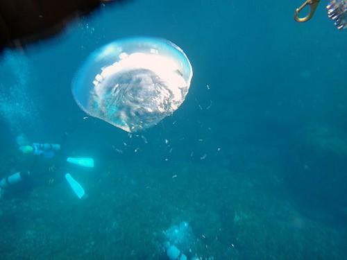 大きな泡を見ながら泳ぎ