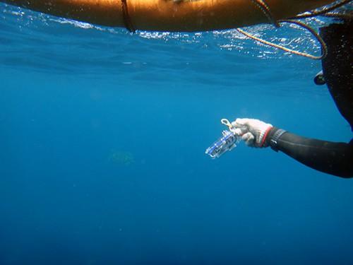 先の方にアオウミガメ