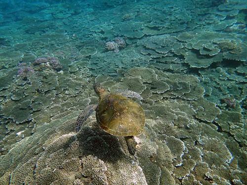 上からアオウミガメを撮ってみて