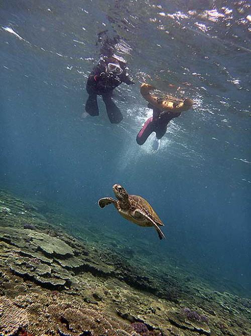 小さいカメと一緒に泳いでみたりもして
