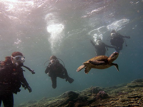 みんなでアオウミガメを見てみたり